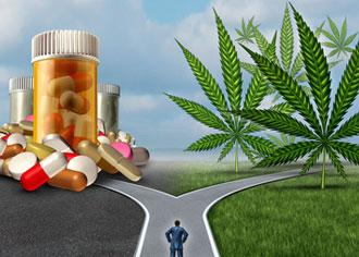 Cannabis ist Droge und Schmerzmittel zugleich. Forscher konnten beide Eigenschaften nun voneinander trennen
