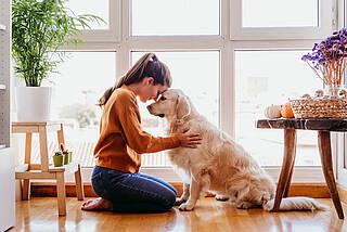 Heimtierhaltung, Hund, Katze, Corona, SARS-CoV-2, Covid-19, Übertragung, infizieren