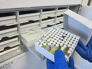 Eisige Temperaturen: In der neuen Biobank von BIH und Charité können mehr als zwei Millionen Bioproben gelagert werden, zum Teil bei minus 196 Grad