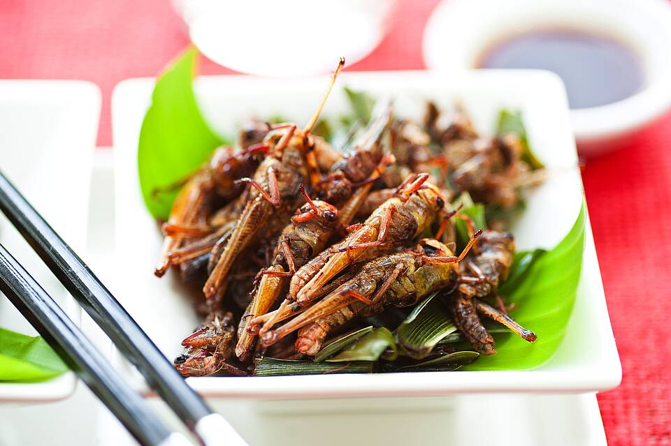 Insekten - appetitlich angerichtet mit Salatgarnitur auf Teller, mit Essstäbchen