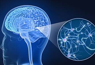 Lebensstil, Gehirnstruktur, soziale Kontakte, Sport, Alkohol