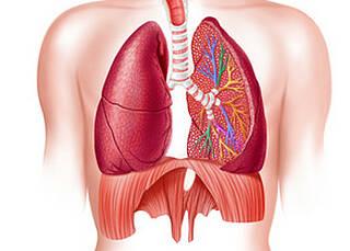 Lungenerkrankungen sind weit verbreitet