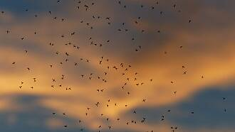 Klimawandel, Malaria, Europa