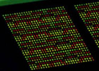 Noradrenalin-Resistenz genetisch bedingt