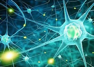 Zentrales Nervensystem