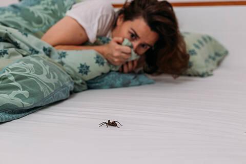 Forscher aus Basel haben eine App gegen Spinnenphobie entwickelt