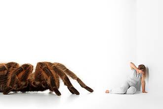 Bei Spinnenphobikern löst der Anblick des Tieres großen Stress aus