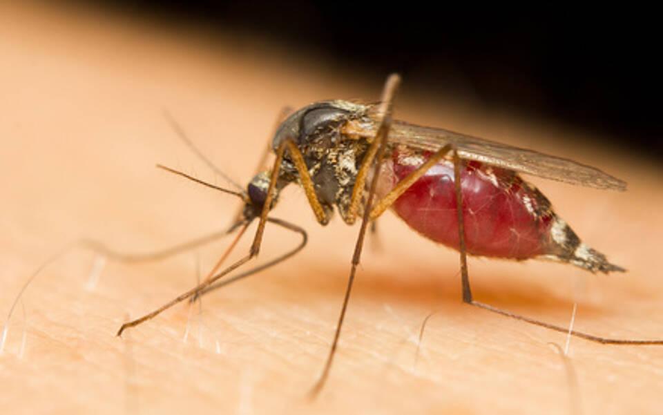 Die durch Mücken übertragene Malaria-Erkrankung kann tödlich sein