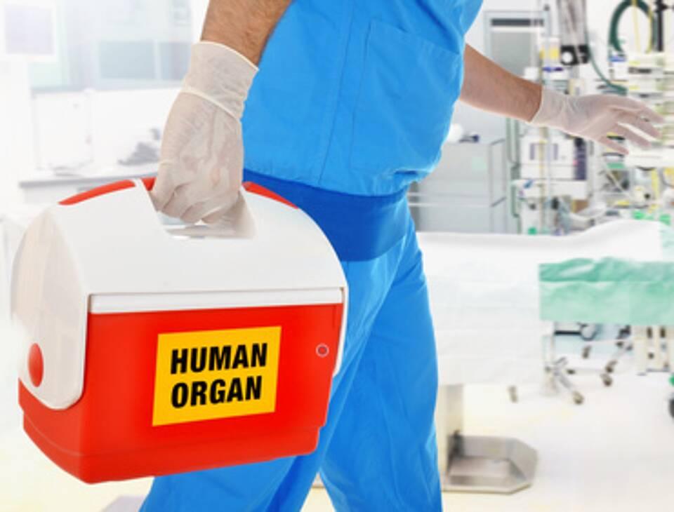 Spenderorgane, Leberspende, Transplantate