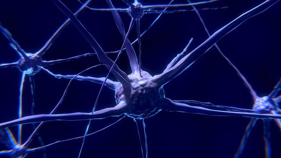 ALS, neuer Therapieansatz, Autophagie