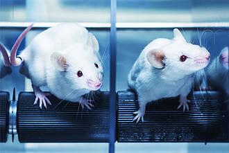 Studie der MHH: Ein Tierstudien-Register könnte viele Tierversuche verhindern