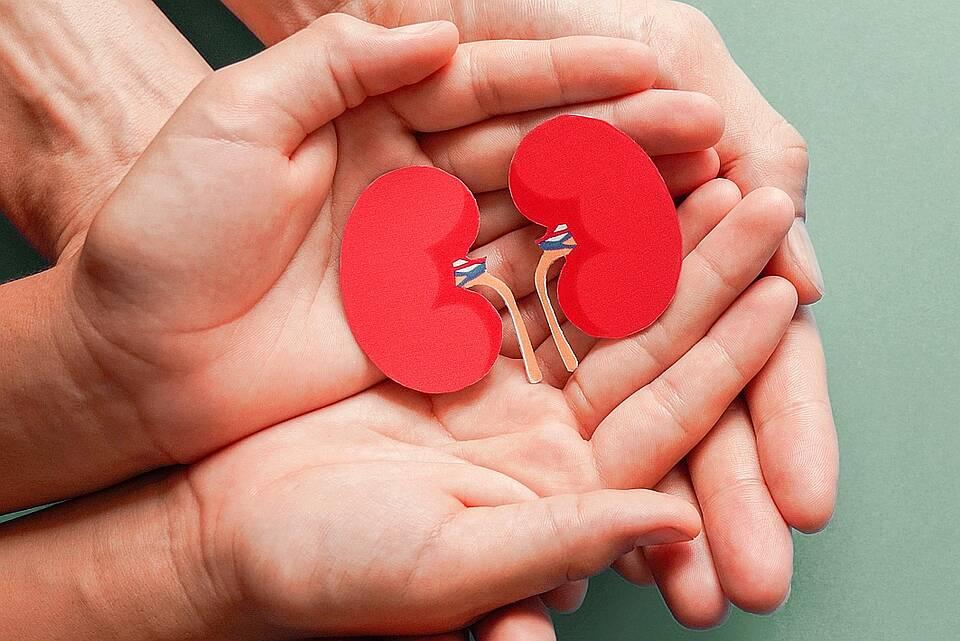 Hände halten schützend zwei symbolhafte, dunkelrote Nieren, ausgeschnitten aus Papier.