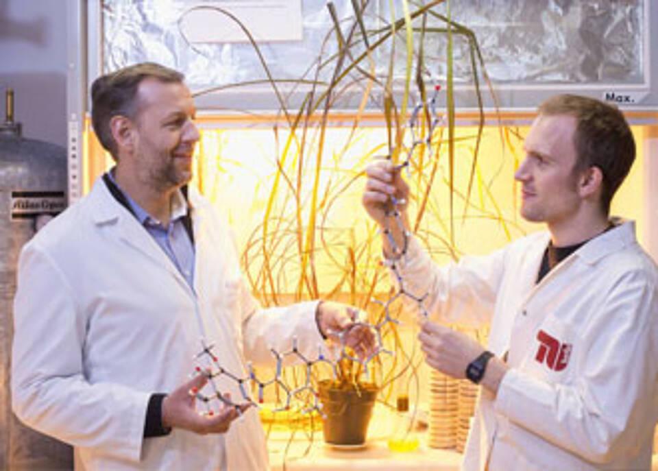 Vom Zuckerrohr zu einem neuen Antbiotikum: TU-Forscher Roderich Süssmuth (li.) und Daniel Petras bei der Arbeit