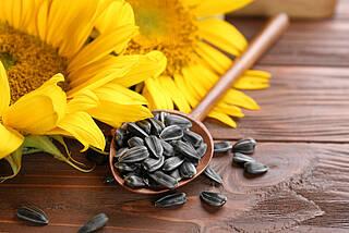 Sonnenblumenkerne enthalten ein Peptid, das sich als Schmerzmittel eignet