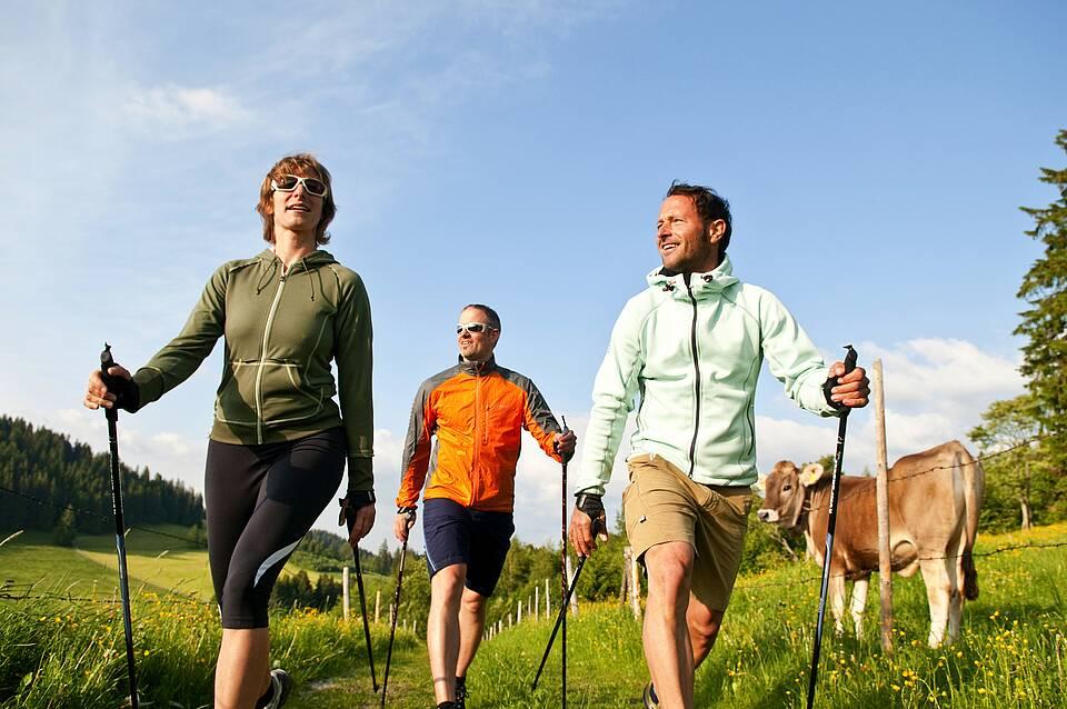 Nordic Walking zu dritt im Voralpenland mit Kuh.