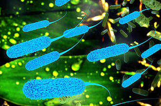 In Bauchspeichelkrebs tummeln sich Bakterien, die die Wirkung von Gemcitabin aufheben