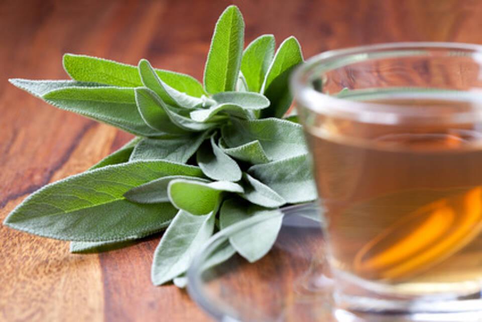 Salbeiblätter enthalten antivirale, abschwellende und schmerzlindernde Wirkstoffe