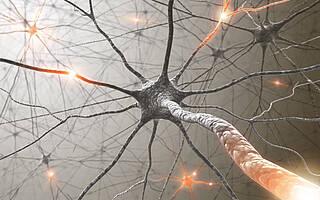 Alzheimer: Bevor die Plaques kommen, weisen Nervenzellen in Rattengehirn eine messbare Übererregbarkeit auf