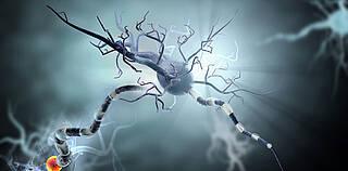 Nervenzellen, zentrales nervensystem, ms, multiple sklerose