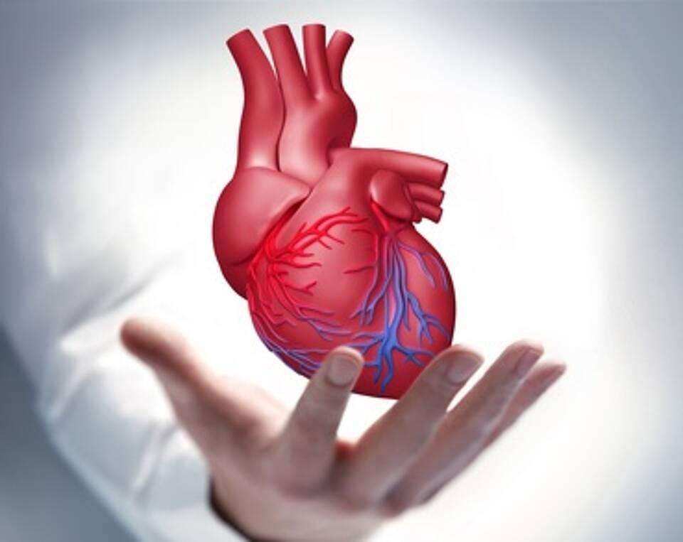 Organspende, Organtransplantation, Tag der Organspende, Herzchirurgie, Widerspruchslösung