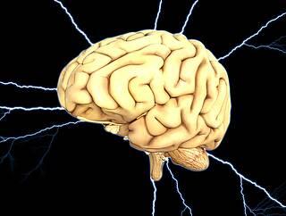 Nature, Studie, Vier Stunden nach Schlachttod, Nervenzellaktivität, Blutzirkulation, Schweinehirne