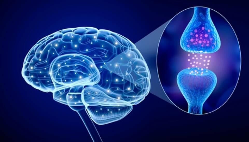 Forscher wollen Alzheimer-Plaques aus dem Weg räumen, bevor die ersten Symptome auftreten
