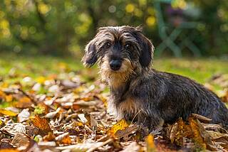 Hunde, Hundebesitzer, Lebenserwartung, Gesundheit