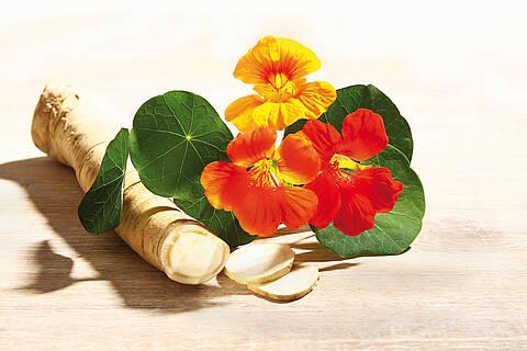 Meerrettichwurzel + Kapuzinerkresse (rote Blüten, grüne Blätter)