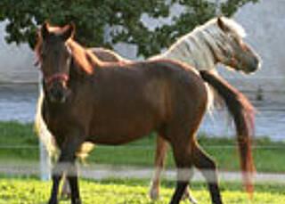Keine Ausnahmen für Pferdehaarallergiker