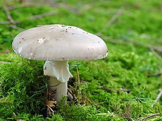 Gefahr durch Pilze