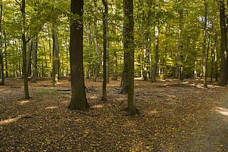 wald, laubwald, bäume, grün