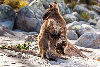 Känguru-Methode