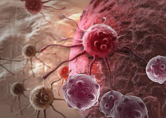 Darmbakterien in der Krebstherapie