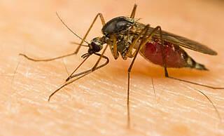 Guinea: Tausende Malaria-Infizierte wurden während des Ebola-Ausbruchs nicht behandelt
