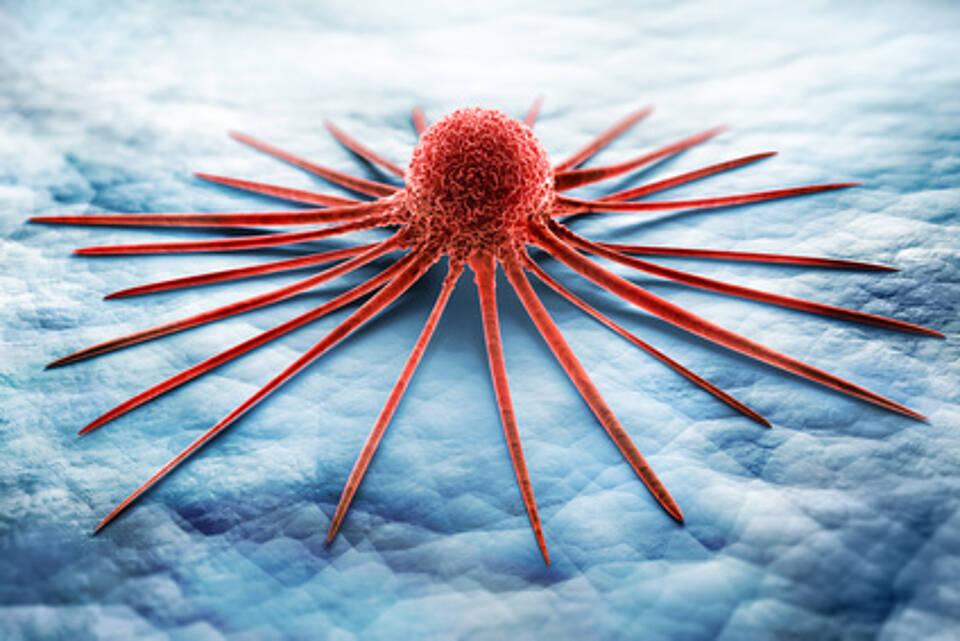 Schlafende Leukämiezellen dingfest gemacht: Suche nach Therapie kann beginnen