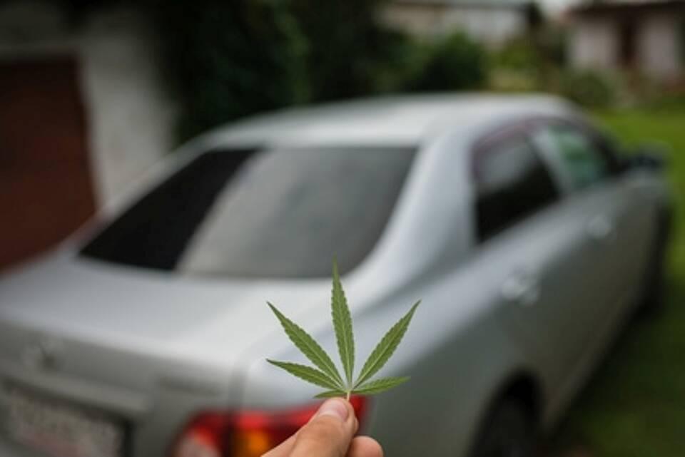 Fünfblättriges Cannabisblatt im Vordergrund (scharf) - Auto im Hintergrund (unscharf)