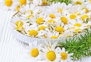 Kamille, Heilpflanzen
