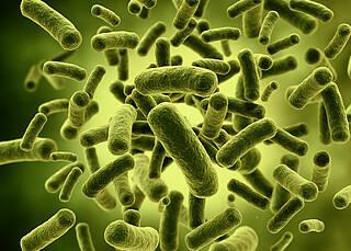 Immuntherapie bei Krebs: Bakterien locken Killerzellen an