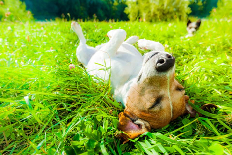 Müdigkeit, müde, Frühjahrsmüdigkeit, Lichttherapie