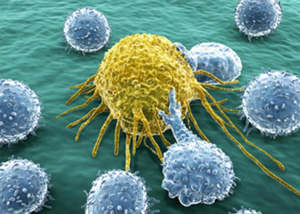 Krebsimmuntherapie, bei welchen Tumoren