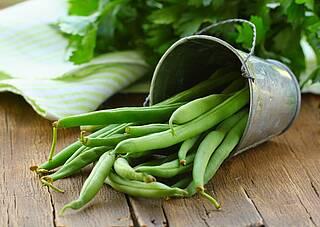 Grüne Bohnen, roh, in einem umgekippten Blecheimer, frisch aus dem Garten.