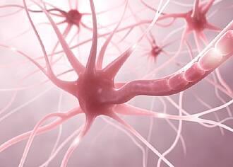 Neuronen-Neubildung durch Glia