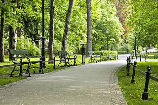 Eine grüne, baumreiche Umgebung senkt das Demenz-Risiko