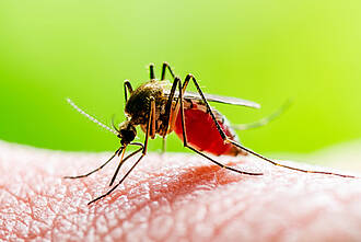 mücke, stechmücke, moskito, blutsauger