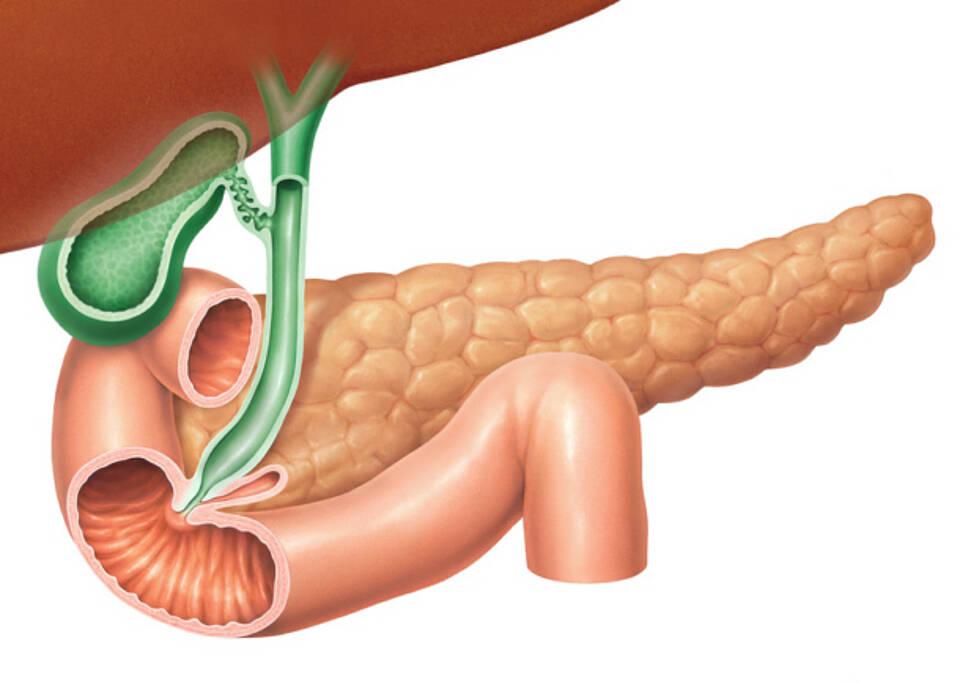 Bestimmung der Pankreatitisenzyme häufig überflüssig