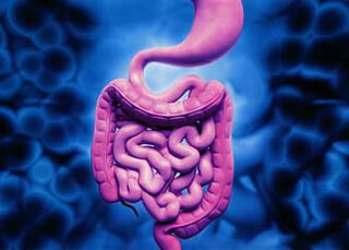 Morbus Crohn und Colitis ulcerosa: Zwei neue Antikörper greifen die Entzündungszellen gezielter an