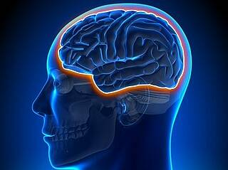 Werden im Hippocampus neue Nervenzellen gebildet? Eine neue Studie weckt Zweifel