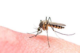 Mehr Forschung zu Zoonosen, wie Zika-Virus geplant