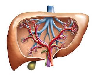 Chronische Entzündung der Gallenwege