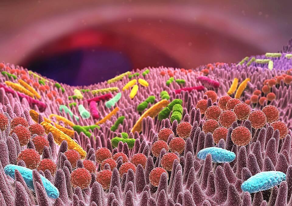 Kunterbunte mikroskopische Darstellung der Darmbakterien.